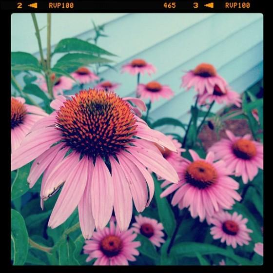 Garden Eats Spring